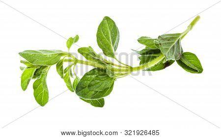 Twig Of Fresh Oregano Herb Isolated On White Background