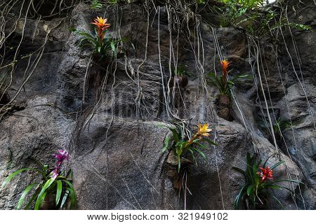 Beautiful Rocks With Colorful Plants.guzmania Lingulata. Tenerife, Spain