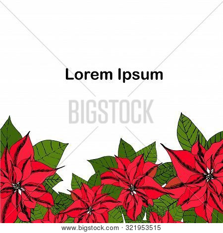 Poinsettia Background Lorem Ipsum. Red Flowers Green Leaves Hand Drawn Bright Winter Holiday Design