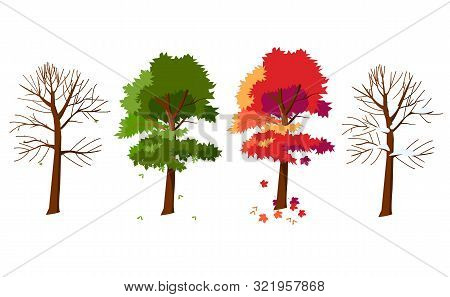 Maple In Four Seasons. Maple In Winter. Maple In Spring. Maple In Summer. Maple Tree In The Fall. Th