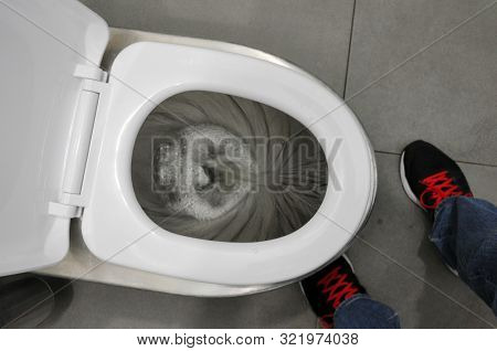 Flush In The Toilet. A Man Flushes In The Toilet Room. Hygiene