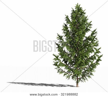 European Spruce. Picea Abies Or European Spruce Or Norway Spruce Isolated On White Surface With Shad