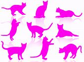 Illustration about funny cats silhouette in typical poses poster