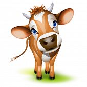 Little jersey cow with a cocked head and blue eyes poster