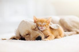 Cat And Dog Sleeping Together. Kitten And Puppy Taking Nap. Home Pets. Domestic Animals.