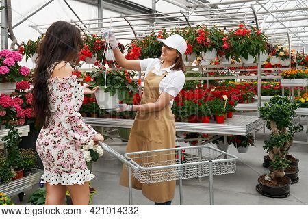 Side View Of Florist Woman Helping Choose Beautiful Pot With Red Flowers For Attractive Young Woman