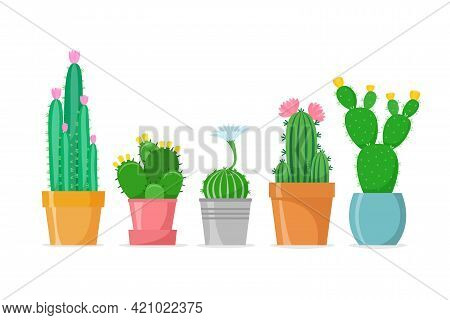 Flowered Cactus Set In A Flat Style. Different Home Cacti In Pots. Blossomed House Succulents. Isola