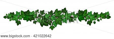 Ivy Leaves Wreath Liana. Green Ivy Branch Garland Isolated On White Background. Decorative Design El