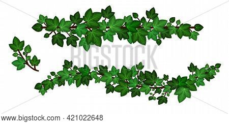 Ivy Leaves Wreath Liana. Green Ivy Garlands, Set Of Curled Branches Isolated On White Background. De