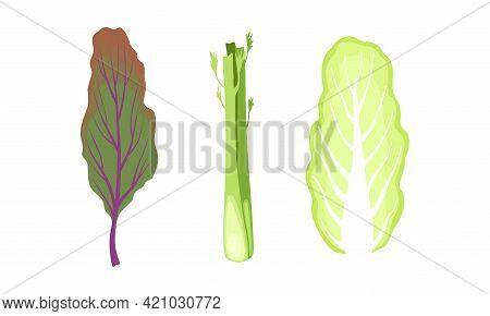 Salad Green Leaves And Leafy Vegetables Set, Mangold, Chinese Cabbage, Celery Stalks, Organic Vegan