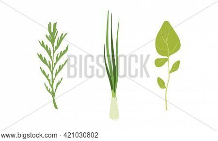 Salad Green Leaves And Leafy Vegetables Set, Fresh Onions, Arugula, Rosemary, Organic Vegan Healthy