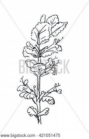 Ground-ivy, Gill-over-the-ground,creeping Charlie, Alehoof, Catsfoot, Field Balm, And Run-away-robin
