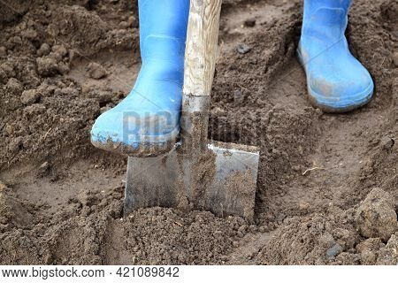 Men's Feet In Blue Rubber Boots Dig The Ground At The Fazenda With An Old Shovel Or A Shovel In The