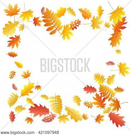 Oak, Maple, Wild Ash Rowan Leaves Vector, Autumn Foliage On White Background. Red Orange Gold Wild A