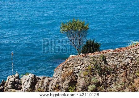 Cliffs in Riomaggiore.