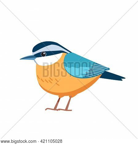 Red-breasted Nuthatch Is A Small Songbird. Scientific Name Sitta Canadensis. Passerine Bird Cartoon