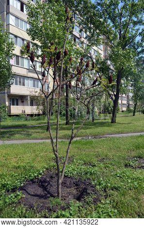 Modern residential area in Kiev. Exterior.Streets,buildings,detales. May 18,2021. Kiev , Ukraine