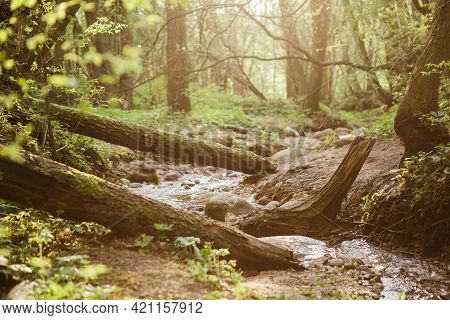 Small And Narrow River Winding Through The Dense Green Forest On Spring At Sunset.