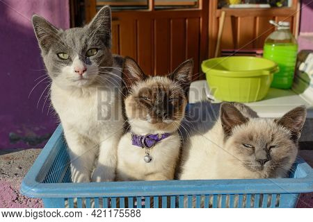 Portrait Of Group Of Young Cats Waking Up.