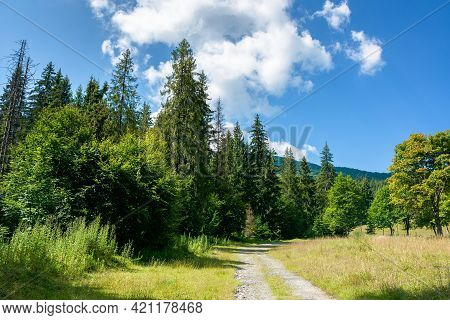 Old Country Road Through Forest. Grass Along The Path. Sunny Summer Landscape In Mountainous Country