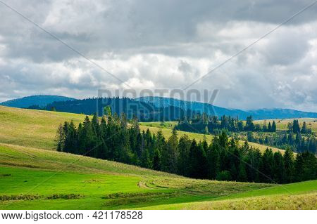 Forest On The Grassy Meadow In Mountains. Stunning Countryside Scenery In Early Autumn Dramatic Weat