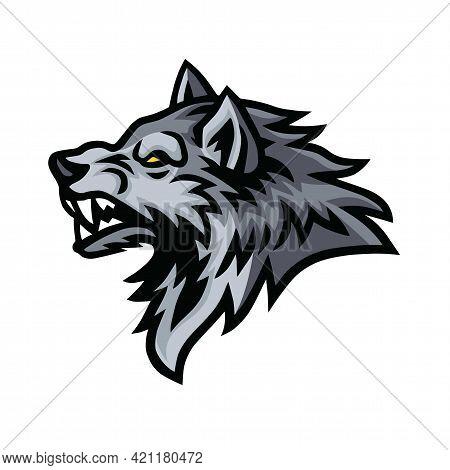 Wolf Beast Logo Sports Mascot Design Template Vector Illustration