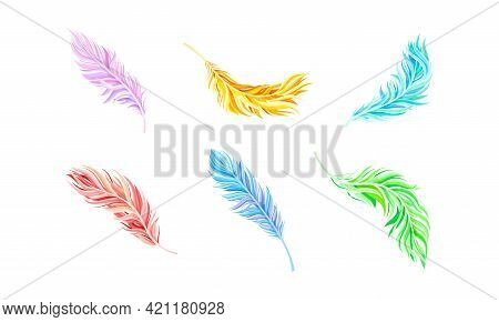 Colorful Bird Feathers As Avian Plumage Vector Set