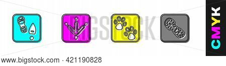 Set Human Footprints Shoes, Chicken Paw, Paw And Icon. Vector