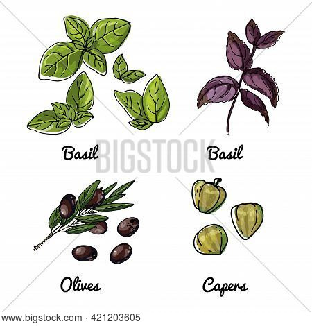 Vector Food Icons Of Vegetables And Spices, Herbs. Colored Sketch Of Food Products. Basil, Olives, C