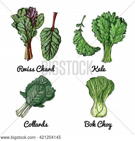 Vector Food Icons Of Vegetables. Colored Sketch Of Food Products. Rwiss Chard, Kale, Collards, Bok C