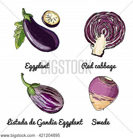 Vector Food Icons Of Vegetables. Colored Sketch Of Food Products. Eggplant, Red Cabbage, Listada De