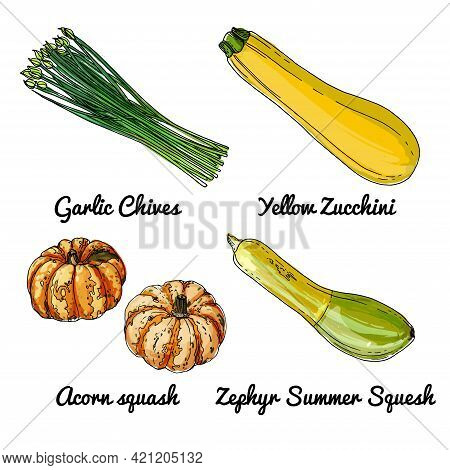 Vector Food Icons Of Vegetables. Colored Sketch Of Food Products. Garlic Chives, Yellow Zucchini, Ac