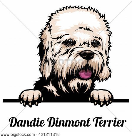 Dandie Dinmont Terrier - Dog Breed. Color Image Of A Dogs Head Isolated On A White Background