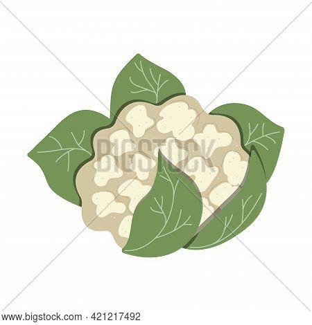 Cauliflower Isolated On White Background, Eco Food