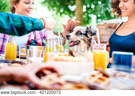 Young Women On Healthy Pic Nic Breakfast With Cute Puppy At Countryside Farm House - Genuine Life St