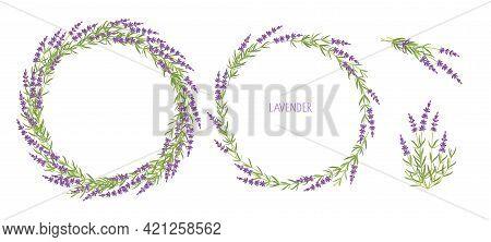 Lavender Plant Set. Lavender Bouquets And Two Wreaths Vector Flat Grass Lavender. Lavender Flowers F