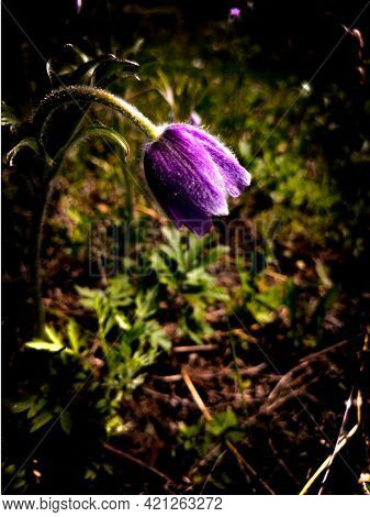 Vanbiz The First Spring Flowers, Which, With Their Splendor, Cheer Us Up And Give Us Smiles.