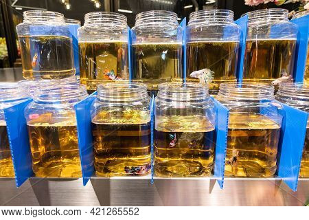 Fighting Fish Isolated In Jars And Visual Contact In Shop