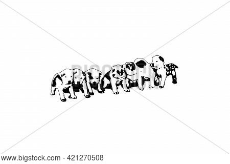 A Litter Of Central Asian Shepherd Puppies On A White Background. Seven Puppies Turkmen Alabai In A