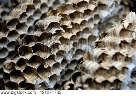 Close-up Of A Paper Honeycomb Background. European Hornet House.
