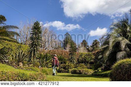 Woman Walking In Terra Nostra Park, Cyca Plants, Furnas.