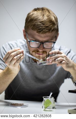 Young Biologist In Glasses Conducts Chemical Experiment With Live Plant Sprouts