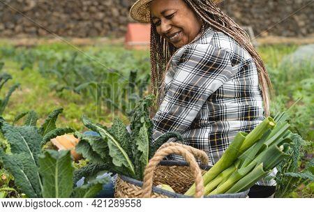 Afro Female Farmer Working In Farmland Harvesting Fresh Vegetables - Farm People Lifestyle Concept