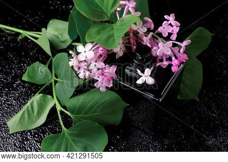 A Sprig Of Lilac With Flowers And Leaves With A Bottle Of Eau De Toilette. Perfume Bottle Made Of Da