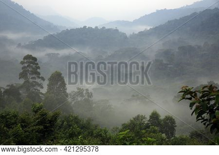 View Of Bwindi Impenetrable Forest, Covered In Morning Mist. Uganda