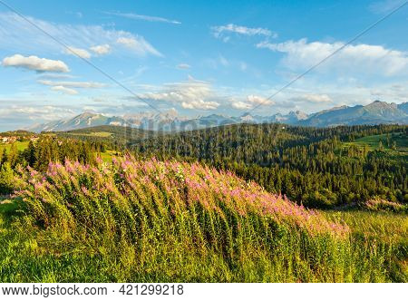 Summer Evening Mountain Village Outskirts With Pink Flowers In Front And Tatra Range Behind (gliczar
