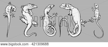 Set With Beautiful Different Reptiles And Lizards. Reptiles Coloring Page, Hand Drawn Illustration.