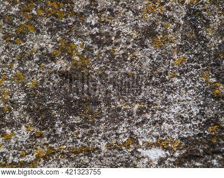 Backstage, Background Concrete Wall With Green Moss