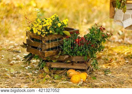 Autumn Flowers Are Standing In Wooden Boxes On The Yellowed Grass. The Concept Of Rural Life And The