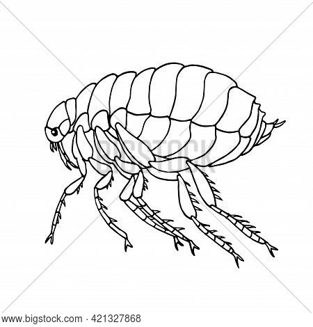 Common Flea, Parasite Insect, Carriers Of Plague And Other Diseases And Infections, Bloodsucker, Vec